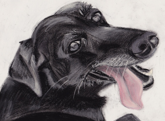 A pastel of Emily, my old Black Lab. She was a great dog. I miss her.