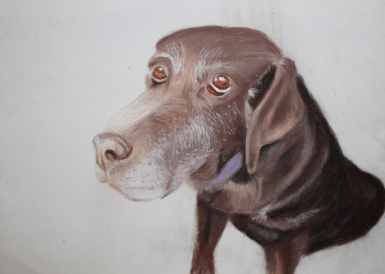 A pastel of our old Chocolate Lab Sarah. She was so sweet.